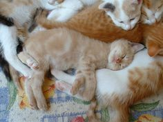 pile of kittens or a pile of heaven? Cute Cats And Dogs, I Love Cats, Cats And Kittens, Baby Cats, Baby Animals, Cute Animals, Cute Animal Pictures, Funny Cat Pictures, Kitten Images