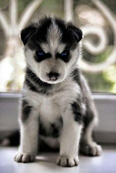 So cute.....looks like wolverine