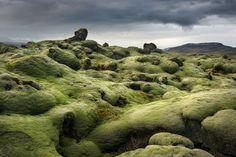 Icelandic Moss  by Adam Gibbs