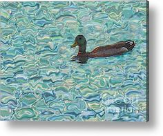 Sitting Duck Acrylic Print by Shelly Weingart