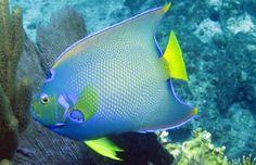 Marine diversity study proves value of citizen science