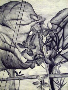 Artwork by Laura Gomez (Grade 7) - Pen Drawing - Taste of the Tropics 2014 Art Exhibit at Pinecrest Gardens - Opening: Thursday, March 6, 2014, 6:00 p.m. – 8:00 p.m. - Exhibit: Monday, March 3, 2014 – Tuesday, April 1, 2014