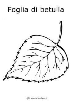 Foglia-Betulla.jpg (600×849)