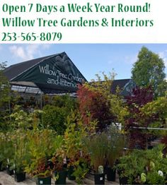 Indoor Garden - University Place, WA - Willow Tree Gardens  Interiors - Home  Garden Accents - Open 7 Days a Week Year Round! Willow Tree ...