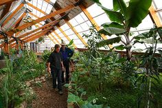 I'm in love with this greenhouse! Growing Bananas Off-Grid: Tour of A Tropical Greenhouse in the Rocky Mountains