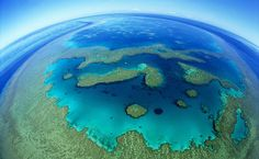 The Great Barrier Reef, Australia - now endangered because the Australian Coal Mining Industry wants to plow through it to ship coal.