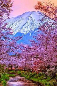 Cerejeiras em flor-Monte Fuji-Japão.