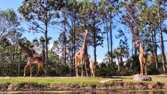 Experience the wild side of Central Florida at the Brevard Zoo