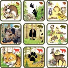 Natuurspel voor kleuters, zoek het dier bij zijn sporen en voedsel no.3, free printable