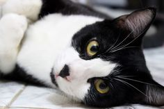 My masked cat black and white. Cute cat photography