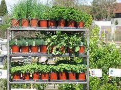 Growing Herbs from Seeds  Develop a Herb Garden Plan