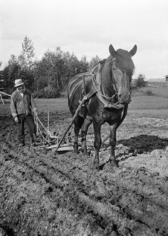 Ollas Per Persson ploughing with a horse, Almo, Dalarna, Sweden, via Flickr.