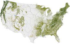 map of us trees | nasa