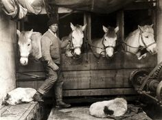 "The man tending the horses is Captain Oates a few months before he said ""I may be some time"", 1911."