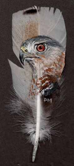 Cooper Hawk Hand Painted on Turkey Feather Framed Feather Drawing, Feather Painting, Feather Art, Native American Artwork, American Indian Art, Viking Symbol, Painted Rocks, Hand Painted, Feather Crafts