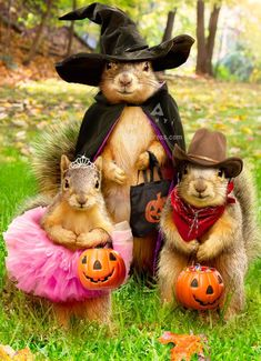 Squirrel Trick Or Treaters - Avanti Halloween Card Inside Verse: Trick or Treat! Hot Halloween Costumes, Pet Costumes, Cute Halloween, Costume Ideas, Cute Squirrel, Baby Squirrel, Squirrel Pictures, Funny Animal Pictures, Animals And Pets