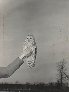 Here is an owl. Vintage orphaned photo