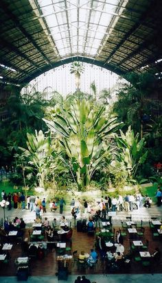 Madrid's Atocha Station Doubles as an Indoor Botanical Garden and Turtle Sanctuary,: