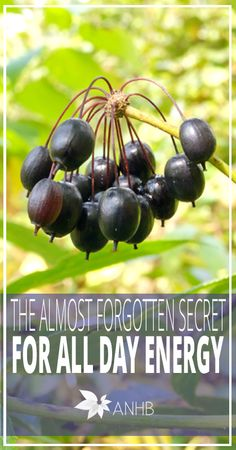 The Almost Forgotten Secret  for All Day Energy - All Natural Home and Beauty