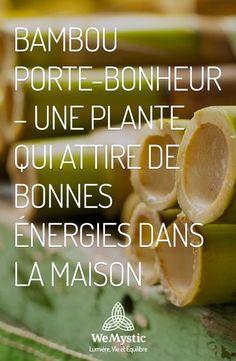 Plantes qui attire de bonnes énergies
