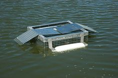 Outdoor Water Solutions Floating Turtle Trap High quality turtle trap with an aluminum frame catches turtles as they sun themselves. This sturdy trap stays Turtle Traps, Crawfish Traps, Minnow Trap, Turtle Pond, Water Pond, Water Solutions, Galvanized Steel, Fishing Tips, Survival