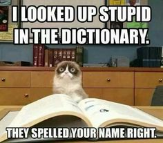 Well your stupid cuz grumpy cat said. Lol