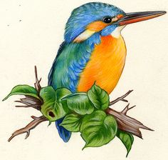 Naturalist Illustrations - naturalist illustrations painted with traditional or digital media - Art Drawings For Kids, Bird Drawings, Pencil Art Drawings, Colorful Drawings, Animal Drawings, African Art Paintings, Animal Paintings, Watercolor Artwork, Watercolor Bird