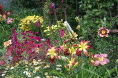 Morning sun bed - daylily 'Crimson Banners' is the red one Turtle Rock, Morning Sun, Day Lilies, Banners, Gardens, Bed, Plants, Stream Bed, Banner