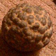 mystery rock fossil