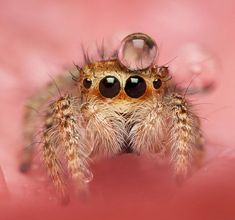 Why do so many people hate spiders? Arachnophobics, don't open. This thread is…