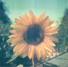 My Favorite Flower <3
