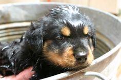 Rommel's first bath.