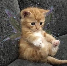 Cute Baby Cats, Cute Little Animals, Cute Funny Animals, Adorable Baby Animals, Silly Cats, Baby Animals Pictures, Cute Animal Photos, Animals And Pets, Baby Farm Animals