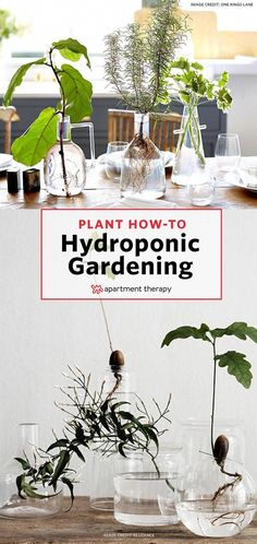We've finally found a solution for people who love houseplants, but don't love when their feline roommates treat the fiddle leaf fig like their own personal litter box. Here are 15 herbs and houseplants that can grow hydroponically, meaning they can survive without potting soil, in just a vase full of water. #hydroponicgardens #Hydroponics