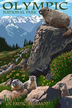 Olympic National Park - Marmots - Lantern Press Poster