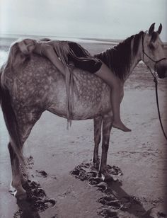 Would love to do a shoot with a horse