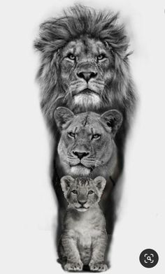 Lion Head Tattoos, Mens Lion Tattoo, King Tattoos, Lion And Lioness Tattoo, Lion Images, Lion Pictures, Lion Tattoo Sleeves, Sleeve Tattoos, Lion Photography