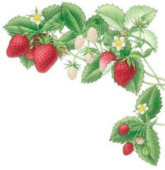 Make your dream of growing strawberries a reality with this guide on how and when to plant, the different types of strawberries, and everything else you need to know to set up and maintain your own delicious strawberry patch. Even if you don't have much space or you live in the city, you can plant in containers or raised beds and still harvest homegrown berries. Fresh strawberry jam, anyone?data-pin-do= by claudine