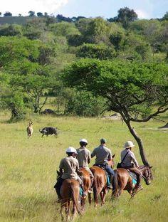 Horseback safari, Lake Mburo, Uganda Contact Pearl of Africa Tours & Travel on Tel: +256 (0)312 260559, E: info@pearlofafricatours.com, Web: www.pearlofafricatours.com to plan your tour to Lake Mburo National Park, and accommodation in the park.