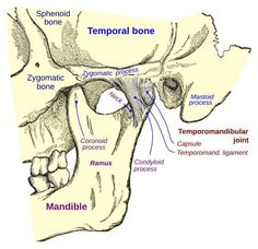 Facial Muscles Anatomy, Muscle Anatomy, Tmj Massage, Self Massage, Tmj Headache, Jaw Pain, Massage Techniques, Muscle Tension, National Institutes Of Health