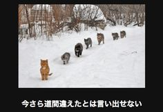 cats in the snow.o cats in the snow. Baby Animals Pictures, Animals And Pets, Funny Animals, Cute Animals, Crazy Cat Lady, Crazy Cats, Black Jokes, Youtube Cats, Orange Tabby Cats