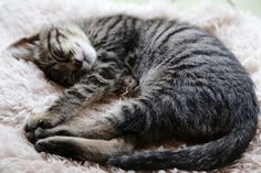 里親さんブログ暑いのに - http://iyaiya.jp/cat/archives/77235