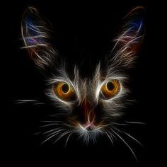 cats eyes by uktilly.deviantart.com on @deviantART