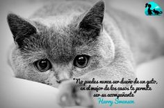 No puedes nunca ser dueño de un gato, en el mejor de los casos te permite ser su acompañante. Harry Swanson