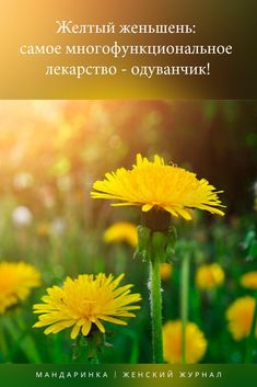 Herbal Medicine, Health Tips, Herbalism, Flora, Health Fitness, Medical, Herbs, Healthy, Garden