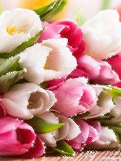 Tulipes couleurs diverses