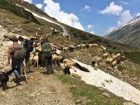 Mount Everest, Mountains, Nature, Travel, Pictures, Art History, School, Naturaleza, Viajes