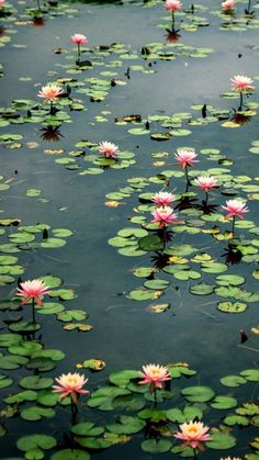 Lily Painting, Stone Painting, Scenery Photography, Landscape Photography, Beautiful Gardens, Beautiful Flowers, Monet, Lotus Garden, Flower Chart