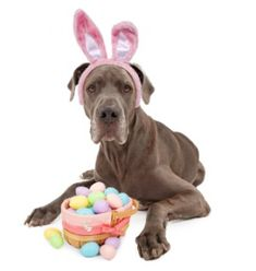 Everything is better with Dogs hair.: How to Easter Egg Hunt with your Dog.