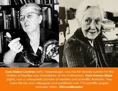 Doris Mabel Cochran (left), herpetologist, was the first female curator for the Division of Reptiles and Amphibians at the Smithsonian. Doris Holmes Blake (right), was a coleopterist (scholar of beetles) and scientific illustrator. They were friends and colleagues, and published over 175 scientific papers between them. http://thescienceofreality.tumblr.com/post/62280071372/smithsonian-women-in-science-wednesday-doris
